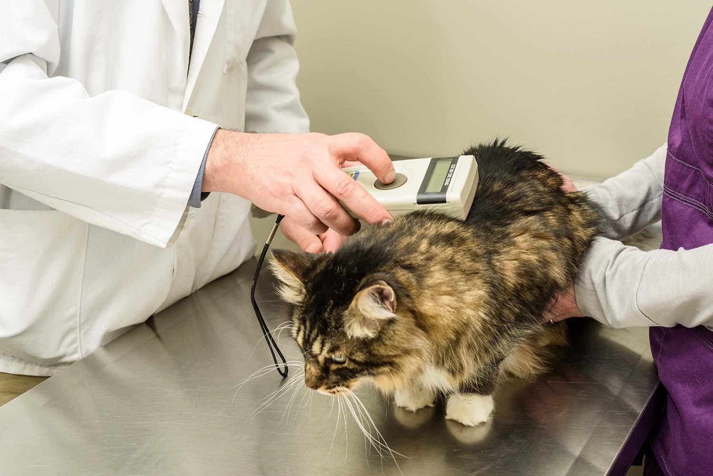 lectura microchip gato en veterinario